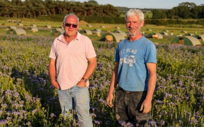 Farmers Plants 81 Acres Of Wildflowers, Feed More Than 1 Million Bees