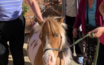 Nursing Home Residents With Dementia Enjoy Very Special Guest When Visits Are Restricted – a Miniature Horse